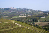 Vineyards on the hills of Langhe — Stock Photo
