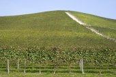 Vineyards on the hills of Langhe — Stok fotoğraf