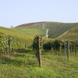 Vineyards on the hills of Langhe — Stock Photo #55560971