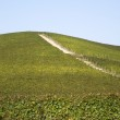 Vineyards on the hills of Langhe — Stock Photo #55561599