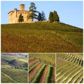 Italy. Vineyards on the hills of Langhe in Piedmont — Stock Photo