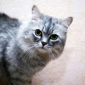 Cat closeup — Stockfoto