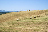 Hay rolls in a mown field — Stock Photo