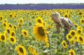Woman in field sunflowers — Stock Photo