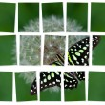 Photo Cut Nature — Stock Photo #61192441