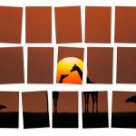 Africa — Stock Photo #63744019