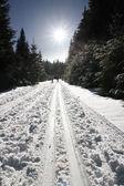 Winter sunny day — Stock Photo