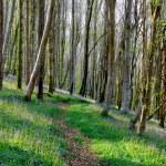 Bluebell Woods — Stock Photo #61149543