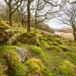 Wistman's Wood on Dartmoor — Stock Photo #61180415