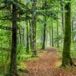 Forest Path — Stock Photo #61181193