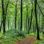 Woodland Path — Stock Photo #61181197