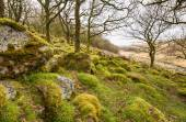 Wistman's Wood on Dartmoor — Stock Photo