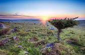 Sunset on Bodmin Moor — Stock Photo