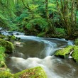 Golitha Falls in Cornwall — Stock Photo #61355533