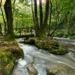 Golitha Falls on Bodmin Moor — Stock Photo #61355587