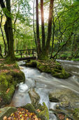 Golitha Falls on Bodmin Moor — Stock Photo