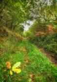 Woodland Path — Stock Photo