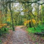 Autumn Woodland Path — Stock Photo #61378847