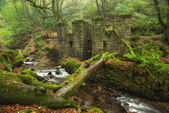Kennall Vale in Cornwall — Stock Photo