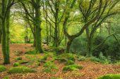 Green Mossy woods — Stock Photo