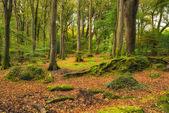 Beautiful Woodland — Stock Photo