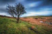 Bleak Bodmin Moor — Stock Photo