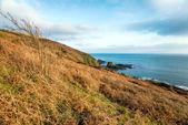 Cornish Coast at Talland Bay — Stockfoto