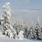 Beautiful winter day — Stock Photo #60981585