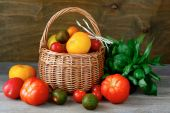 Tomato harvest in a basket — Stock Photo