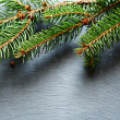 Christmas pine branch on slate background — Stock Photo #54032567