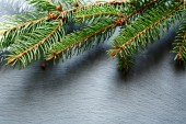 Christmas pine branch on slate background — Stock Photo