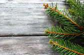 Christmas pine branch on gray wooden boards — Stock Photo