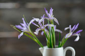 Iris flowers closeup — Stock fotografie