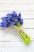 Hyacinth on the boards — Foto Stock