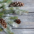 Decorative christmas pine branch with cones — Stock Photo #56477973