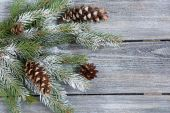 Decorative christmas pine branch with cones — Stock Photo