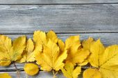 Yellow leaves on the boards — Stock Photo