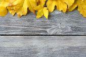 Foglia di acero gialla sui bordi di legno — Foto Stock