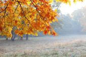 Autumn oak branches and rime forest — Stock Photo