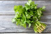 Bunch of fresh cilantro on the boards — Stock Photo