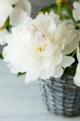 Beautiful white flowers in a vase — Stock Photo