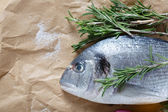 Sea bream on paper with rosemary — Stock Photo