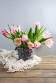 Fresh spring tulips in bucket — ストック写真