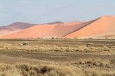 苏斯公园纳米比亚 — 图库照片