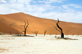 Sossusvlei park, Namibia — Stock Photo