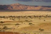 Namibian Landscape at hte sunset — Stock Photo
