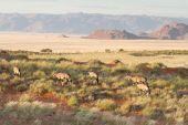 Oryx in the wildlife, Namibia — Stock Photo