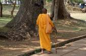Old buddhist monk — Foto Stock