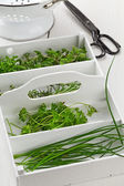 Freshly harvested kitchen herbs from the garden — Stock Photo