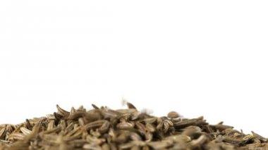 Cumin or caraway seeds — Stock Video